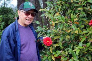Camellia_11