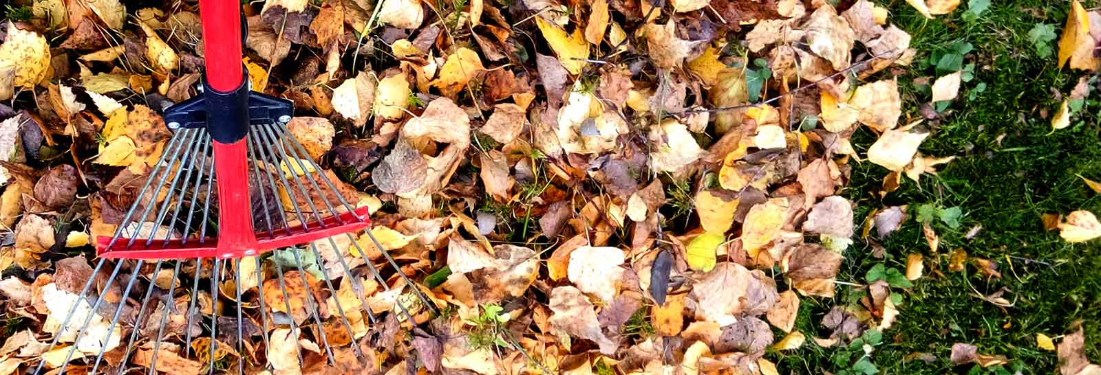 How to Winterize Your Lawn and Garden: Fall Maintenance Tips ...